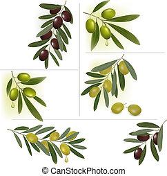 ensemble, olives., arrière-plans, vecteur, vert, noir, illustration.