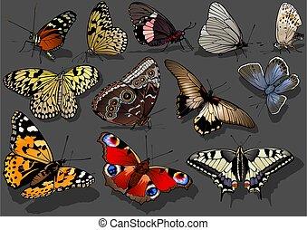 ensemble, papillons, brillamment, coloré