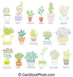 ensemble, pots, illustration, herbes, épices, fleurs