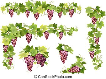 ensemble, tas, raisins, rouges