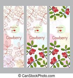 ensemble, thé, collection., herbier, cowberry, bannière