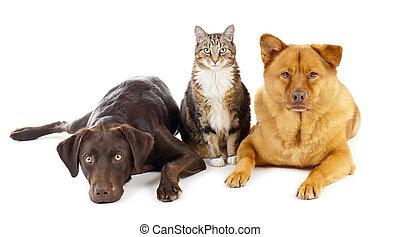ensemble, trois, animaux familiers