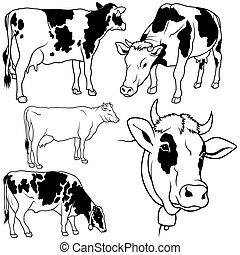 ensemble, vache