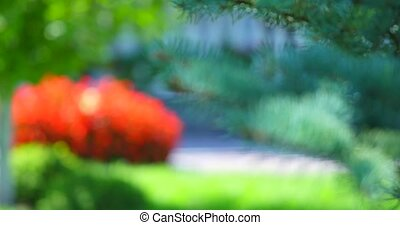 ensoleillé, jour arbre, branche, noël