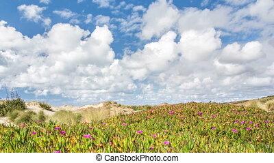 ensoleillé, vert, sur, jour, en mouvement, zélande, nuages, nouveau, côte, fleurs, jeûne
