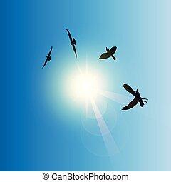 ensoleillé, voler, ciel, oiseaux
