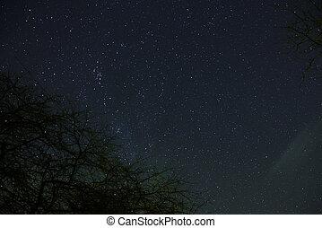 entiers, nuages, lumière, sur, ciel, lune, forêt, étoiles, nuit, dépassement