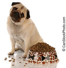 entiers, séance, nourriture, carlin, bol, chien, à côté de