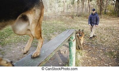 entraîné, training., sheepdog, race, chien