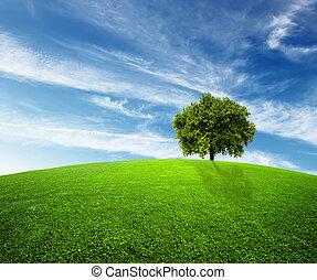environnement, vert