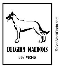 eps, 10, malinois, belge, vecteur, berger, chien