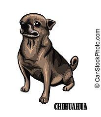 eps, brun, 10, chihuahua, chien