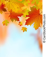 eps, jaune, leaves., automne, 8, érable