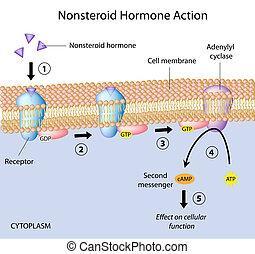 eps10, nonsteroid, hormones, action