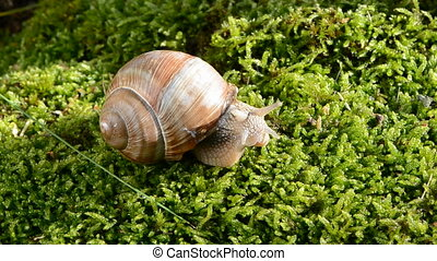 escargot, mousse, vert