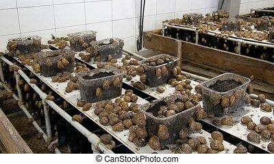escargots, nombre, chambre, ferme, terrestre, boîtes, ramper, délicatesse, lot, escargot, cosmetology., froid, mucus, protéine, utile, sain