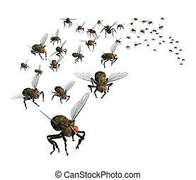 essaim, mouches
