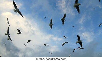 essor, troupeau, oiseaux