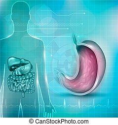 estomac, normal, fond, cardiogramme, section, croix, anatomie, entourer, fond, technologie, résumé, organes