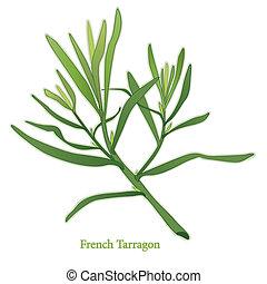 estragon, aromate, francais