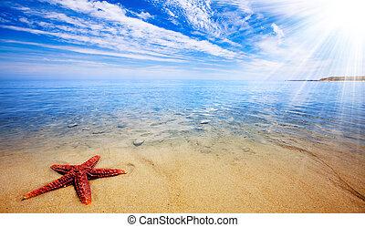 etoile mer, paradis