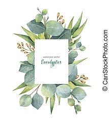 eucalyptus, branches, feuilles, isolé, aquarelle, arrière-plan., vecteur, vert, floral, blanc, carte