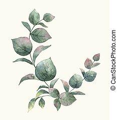 eucalyptus, vecteur, bouquet, aquarelle, feuilles, vert, branches.