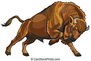 européen, bison