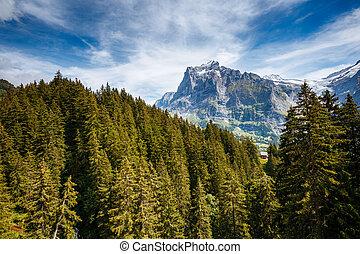 europe., alpin, emplacement, endroit, vue, eiger, grindelwald, alpes, suisse, village.