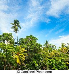 exotique, arrière-plan., beau, palmiers, noix coco
