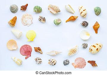 exotique, coquilles, arrière-plan., mer, blanc, composition