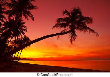 exotique, coucher soleil, palmier