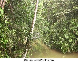 exotique, courant, rivière, par, rainforest
