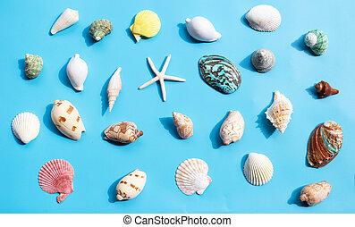 exotique, etoile mer, bleu, arrière-plan., mer, composition, coquilles