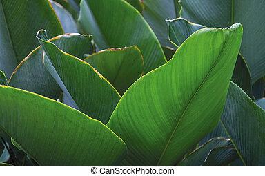 exotique, feuilles, fond