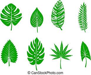 exotique, feuilles, vert