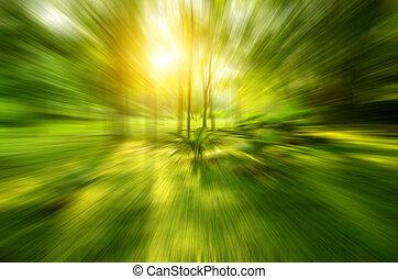 exotique, forêt verte, levers de soleil