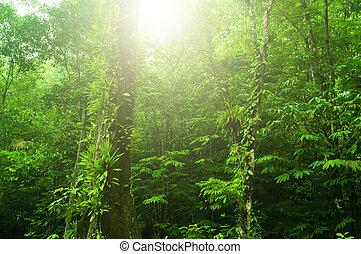 exotique, forêt verte