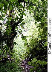 exotique, jungle