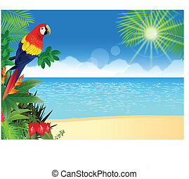 exotique, macaw, plage, backgroun