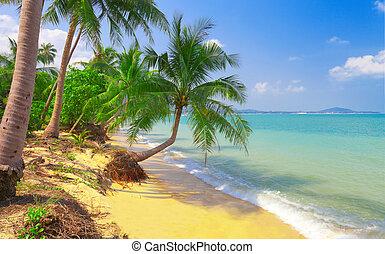 exotique, paume, noix coco, plage