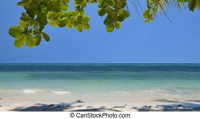 exotique, plage tropicale