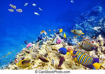 exotique, sous-marin, coraux, mondiale, fish.