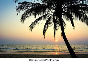 exotique, thaïlande, plage.