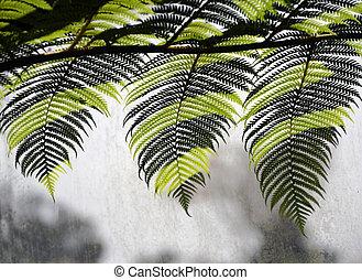 exotique, trois, fougère, feuilles