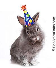 fâché, lapin, chapeau anniversaire, gris, à poil