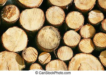 faisceau, court, regimber, bois, bois construction