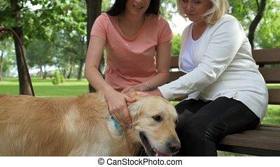 famille, positif, chien, palming, leur, dehors