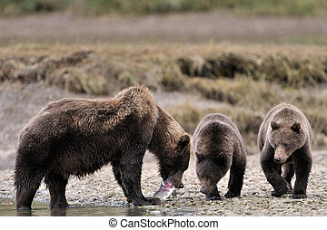 family., grizzly