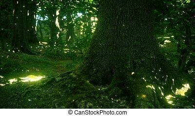 fantasme, forêt, lumières, luciole, magique